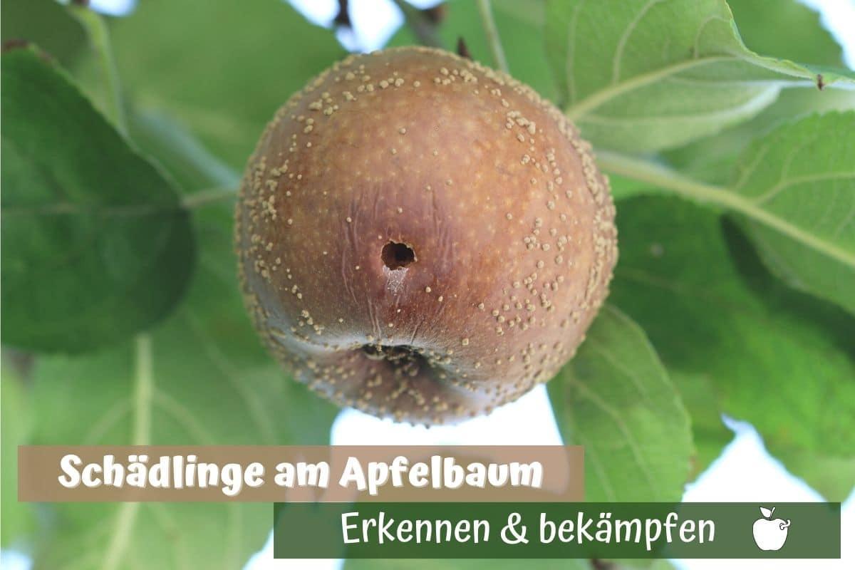 Apfelbaum-Schädlinge