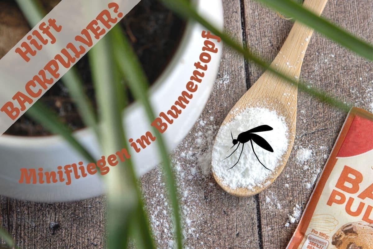 Backpulver gegen Fliegen in Blumenderde