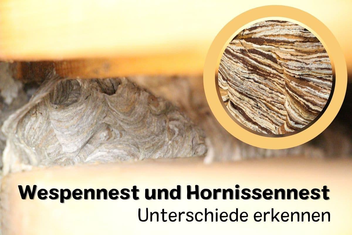 Hornissennest und Wespennest unterscheiden