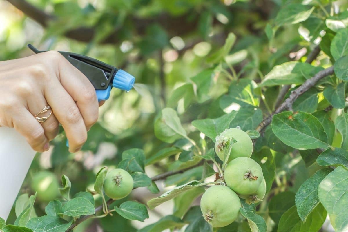 Pflanzenschutzmittel wird auf Apfelbaum gesprüht