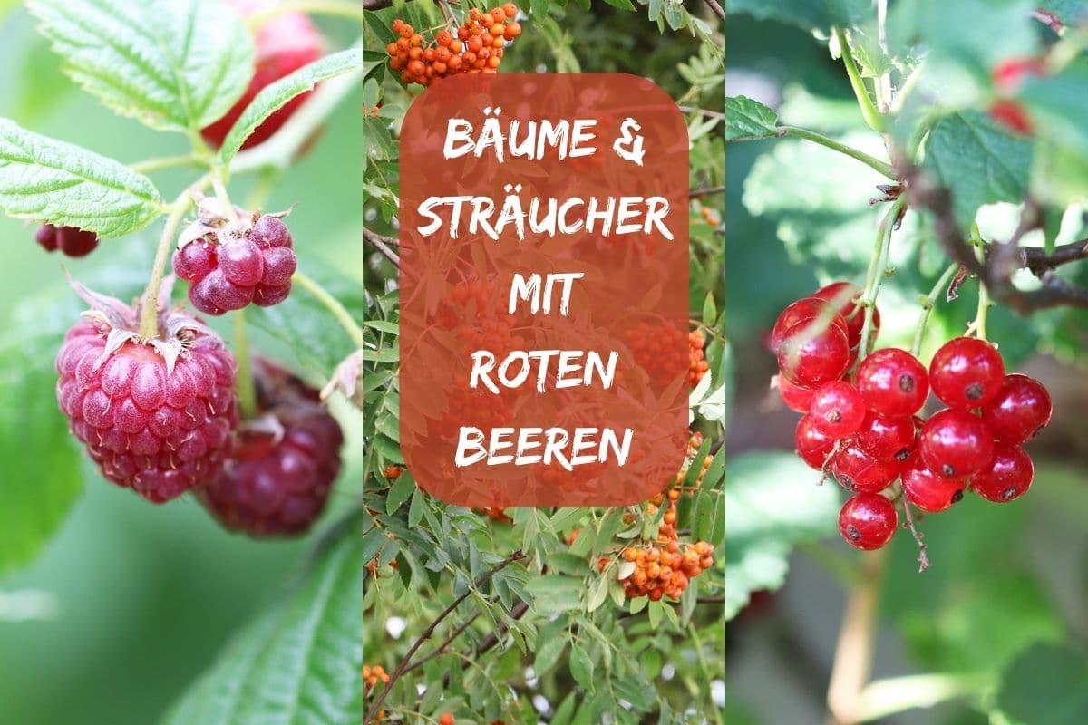 Bäume und Sträucher mit roten Beeren