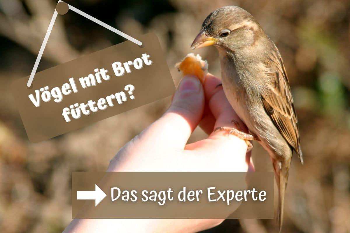 Vögel mit Brot füttern