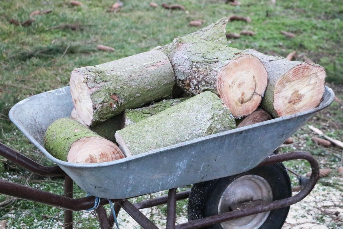 Baumfällung - Stammholz