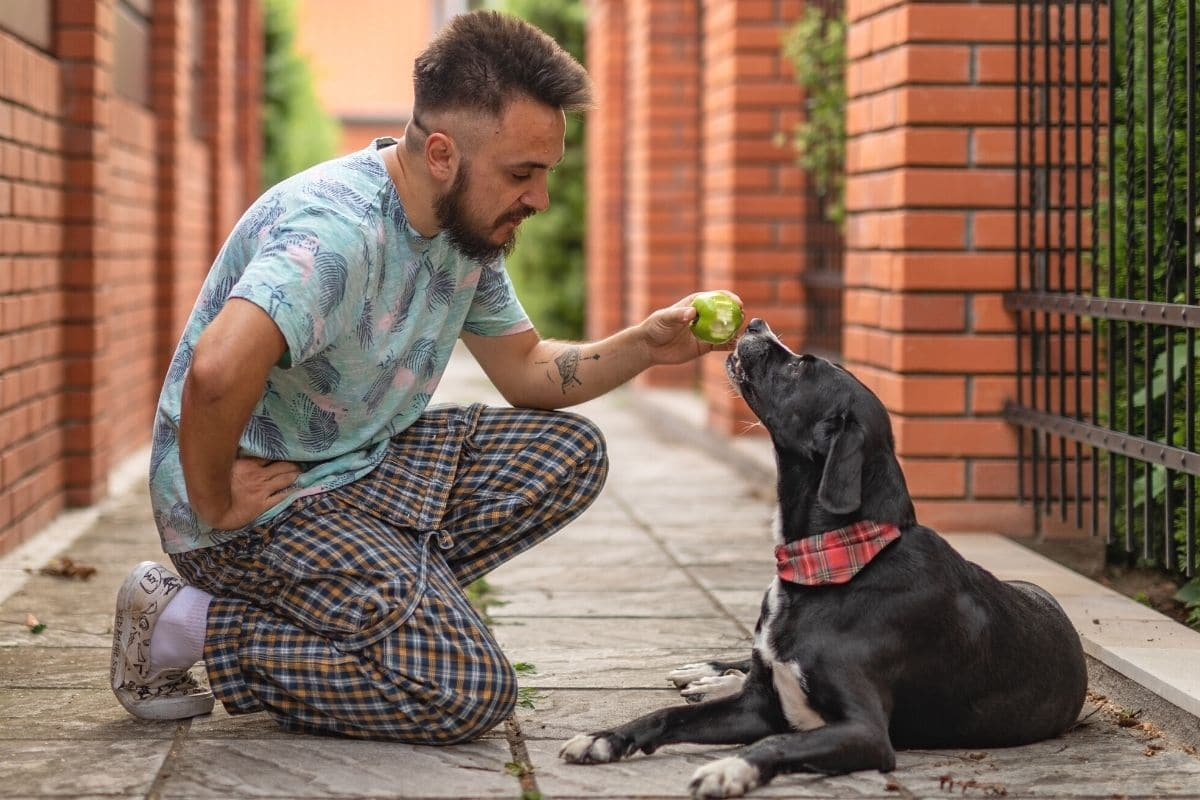 Herrchen füttert Hund mit Apfel