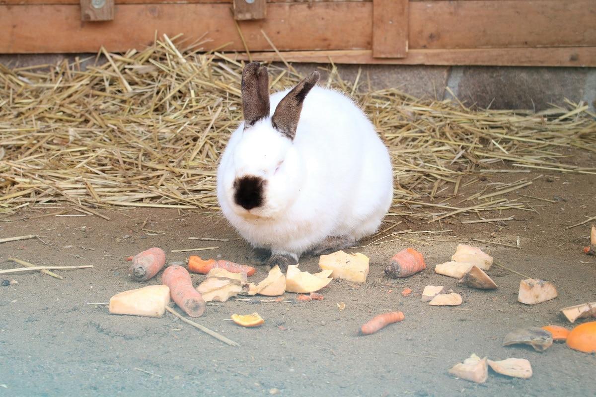 Was essen Kaninchen - Gemüse und Heu