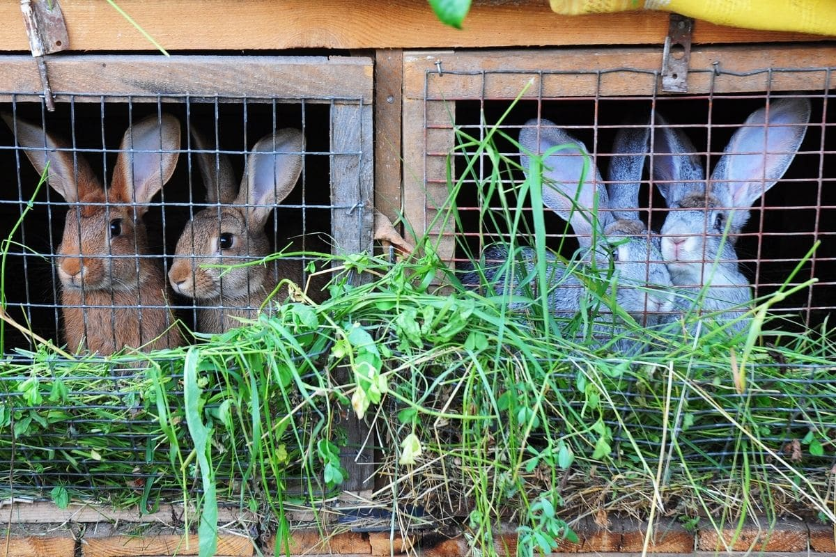 Kaninchenfutter - Grünfutter
