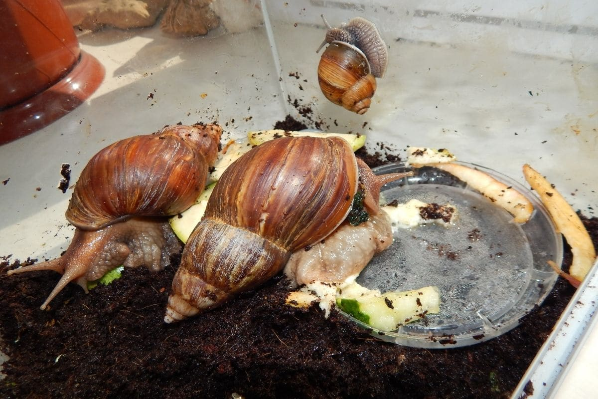 Was fressen Schnecken - Schnecken im Terrarium