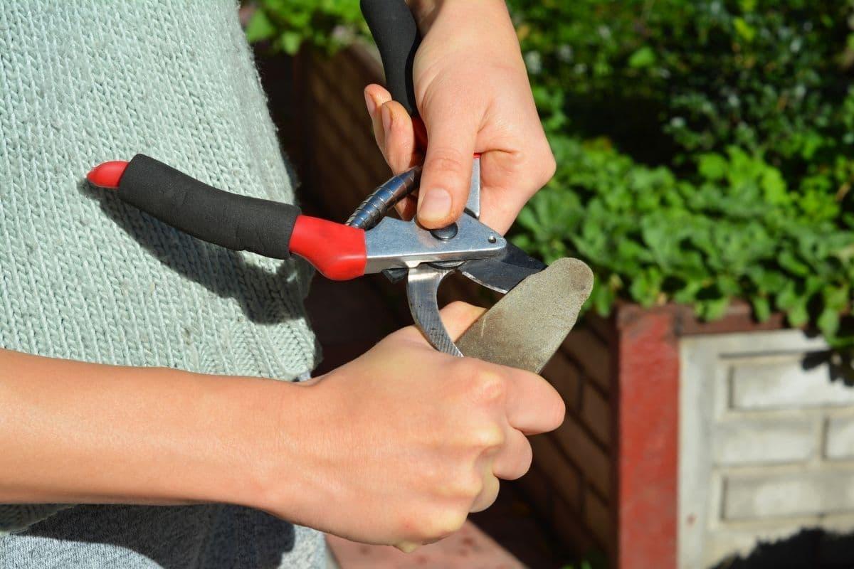 Gartenschere schärfen