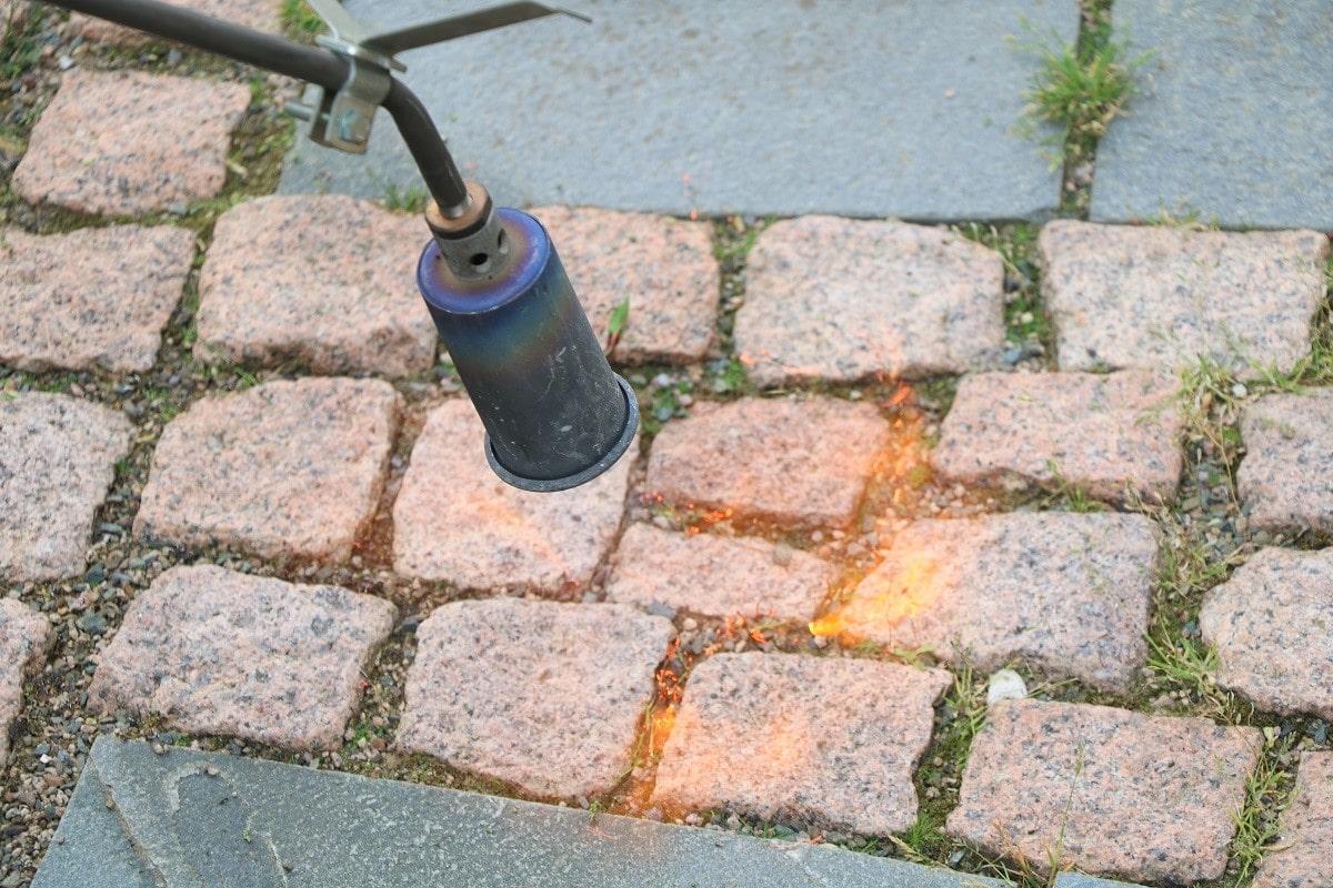 Unkraut mit Gasbrenner abflammen