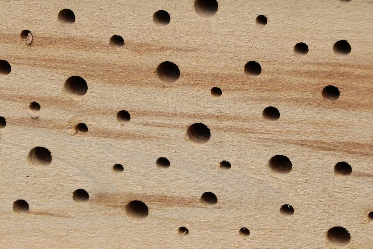 Füllmaterialien - Hartholz mit Löchern