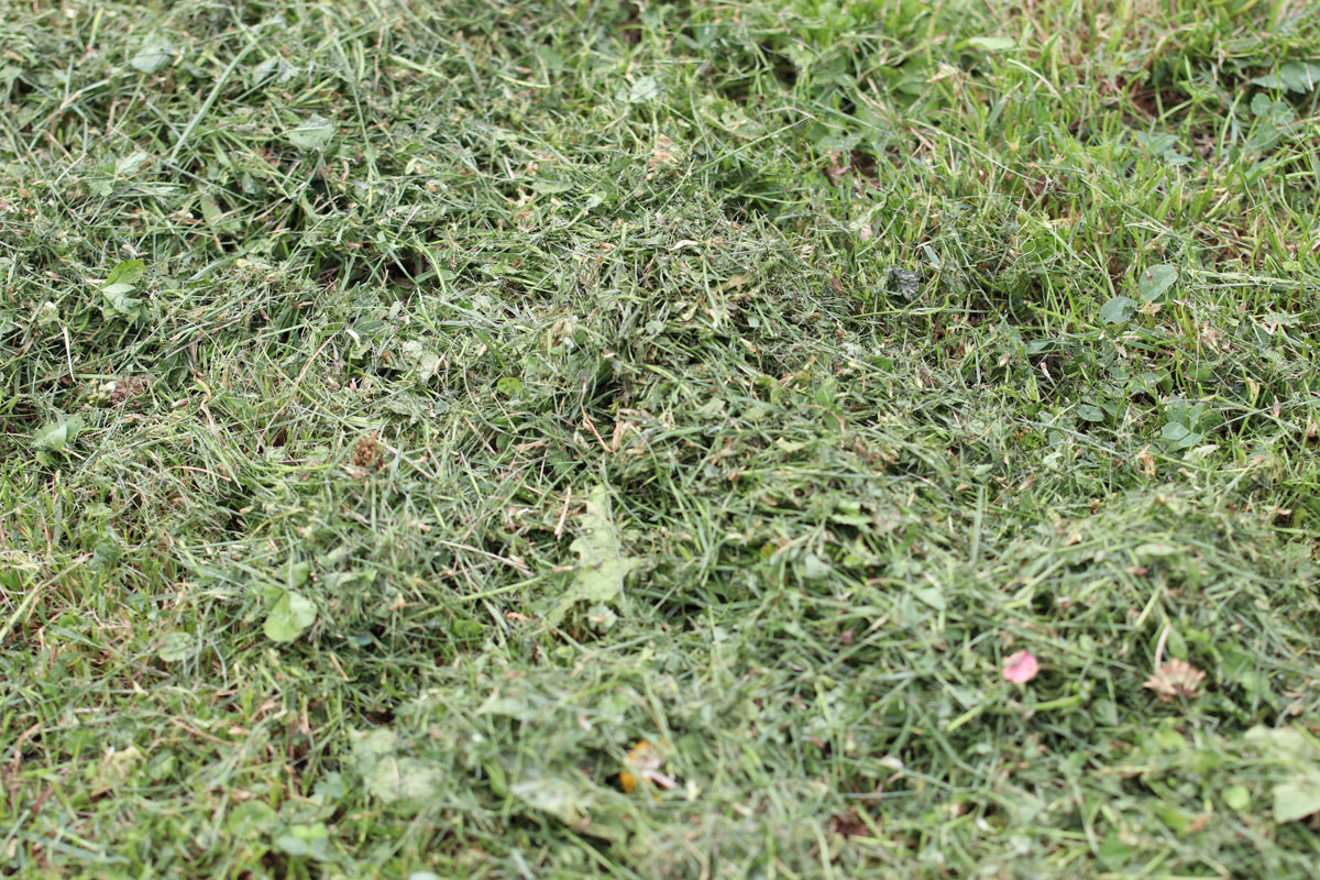 Mulch aus Rasenschnitt