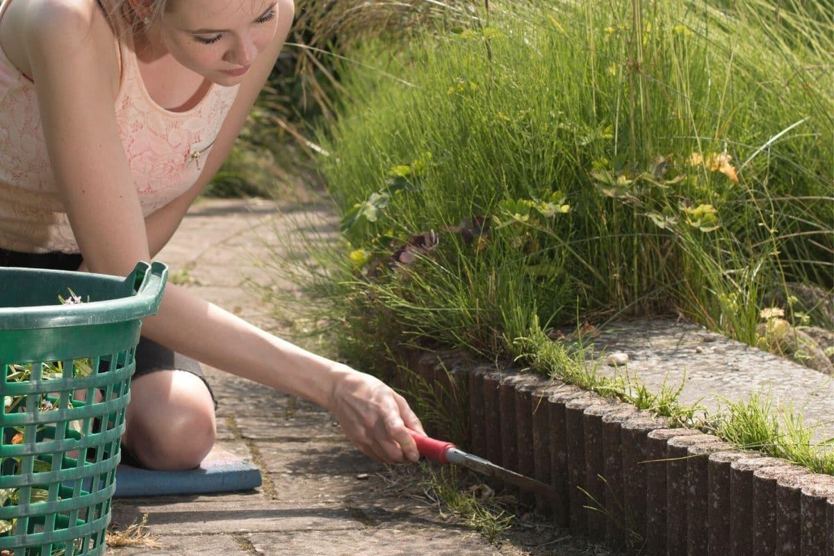 Moos von Pflaster entfernen - Unkraut mit Fugenkratzer entfernen
