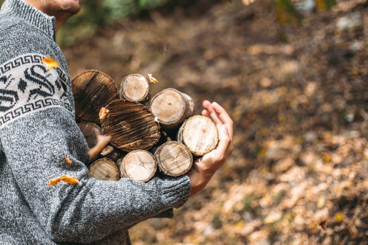 Holzsammeln im Wald