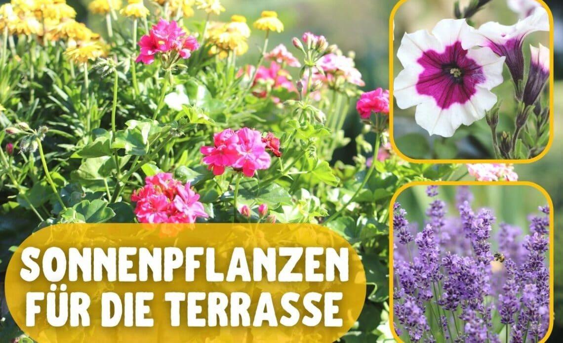 Terrassenpflanzen für Sonne