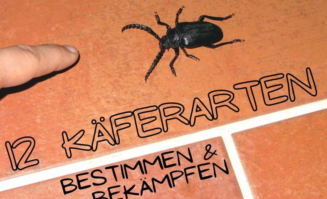 Käferarten im Haus