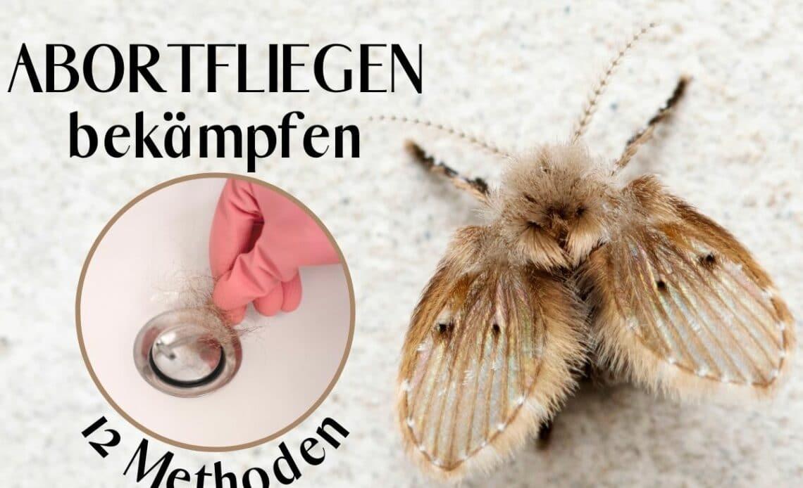 Schmetterlingsmücken bekämpfen