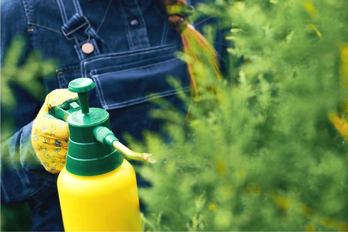 Pflanzen mit Ackerschachtelhalm-Sud besprühen