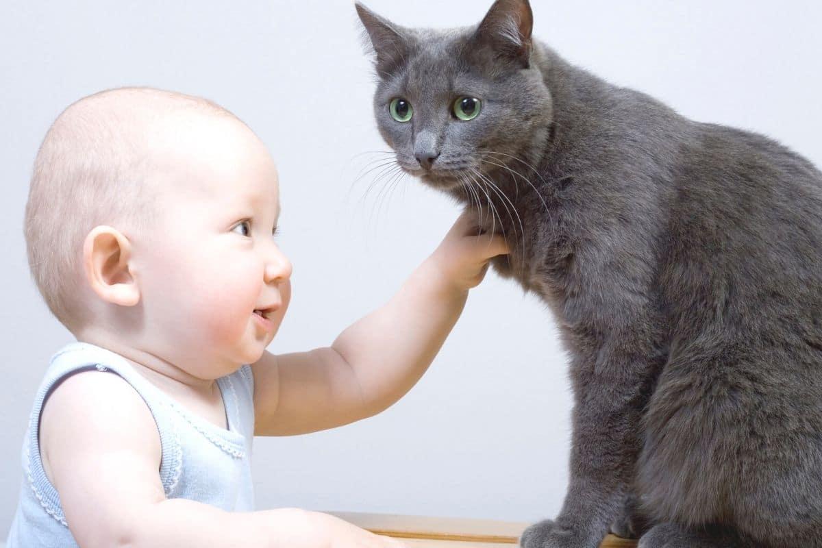 Gummibaum giftig - Baby und Katze