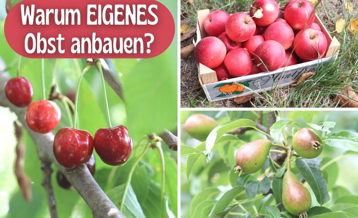 Eigenes Obst anbauen