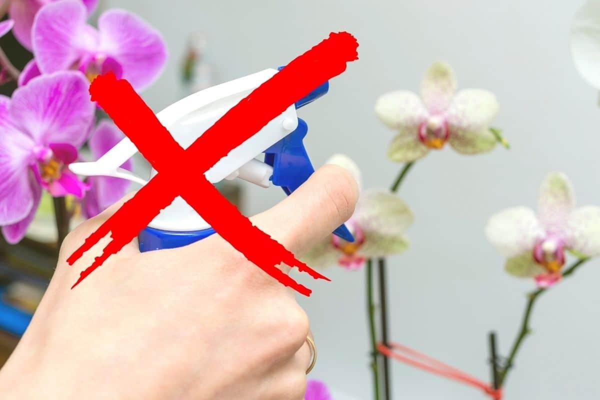 Orchideen nicht besprühen