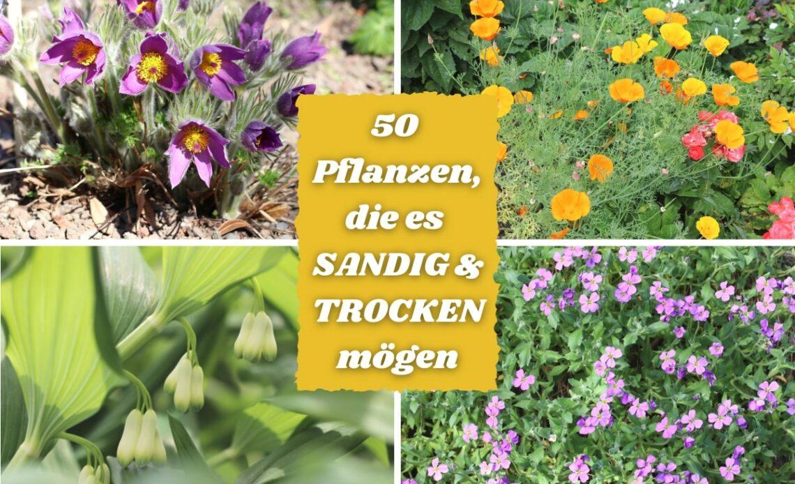 Pflanzen für sandige oder trockene Böden