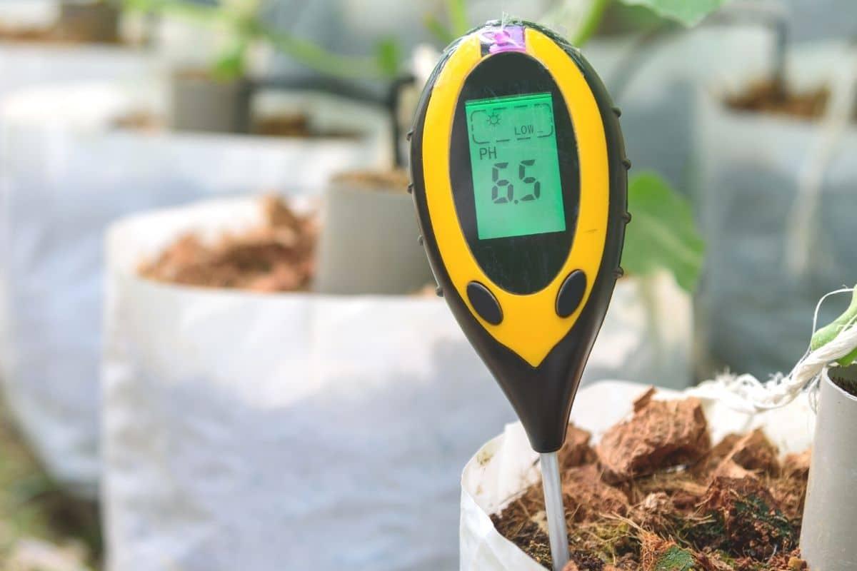 pH-Wert messen