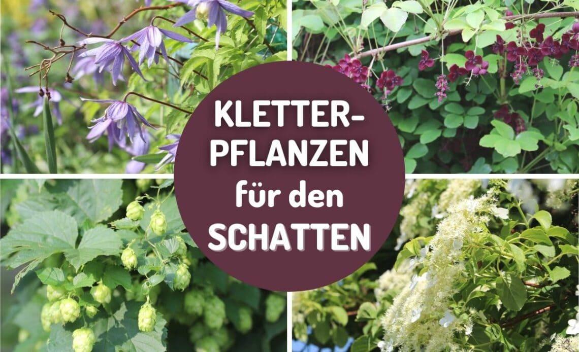 Schatten-Kletterpflanzen Collage
