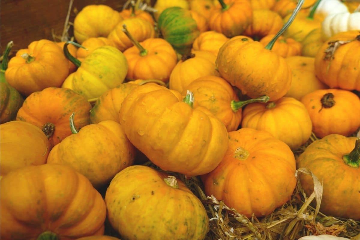 Kürbis 'Mandarin Orange'