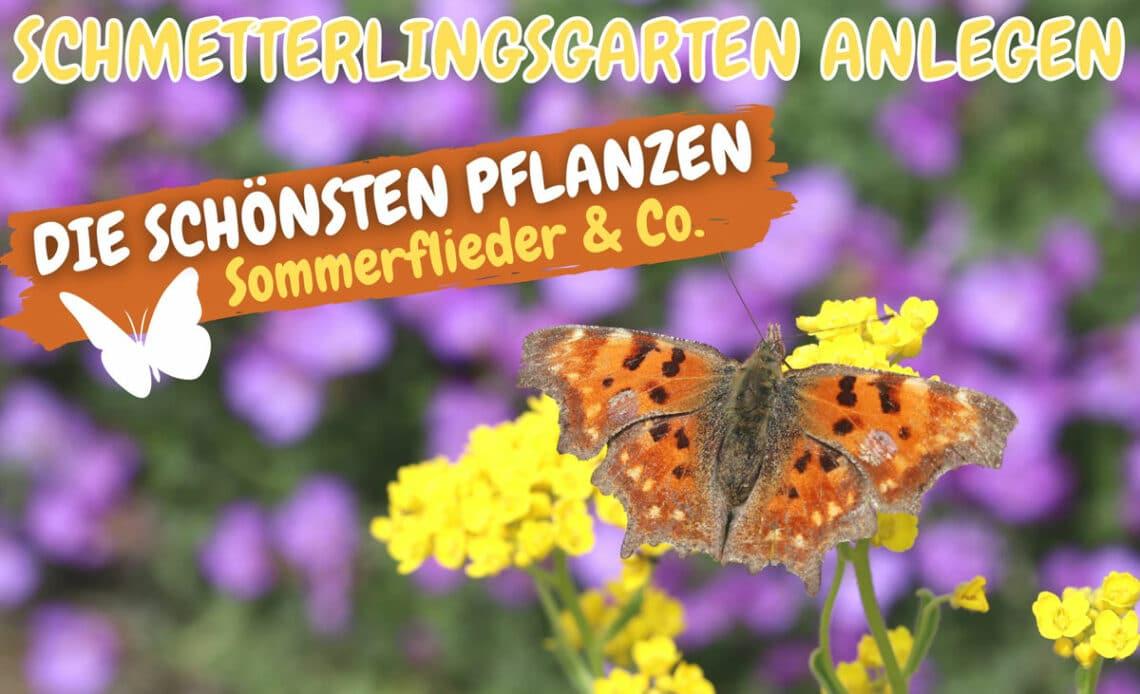 Schmetterlingsgarten anlegen