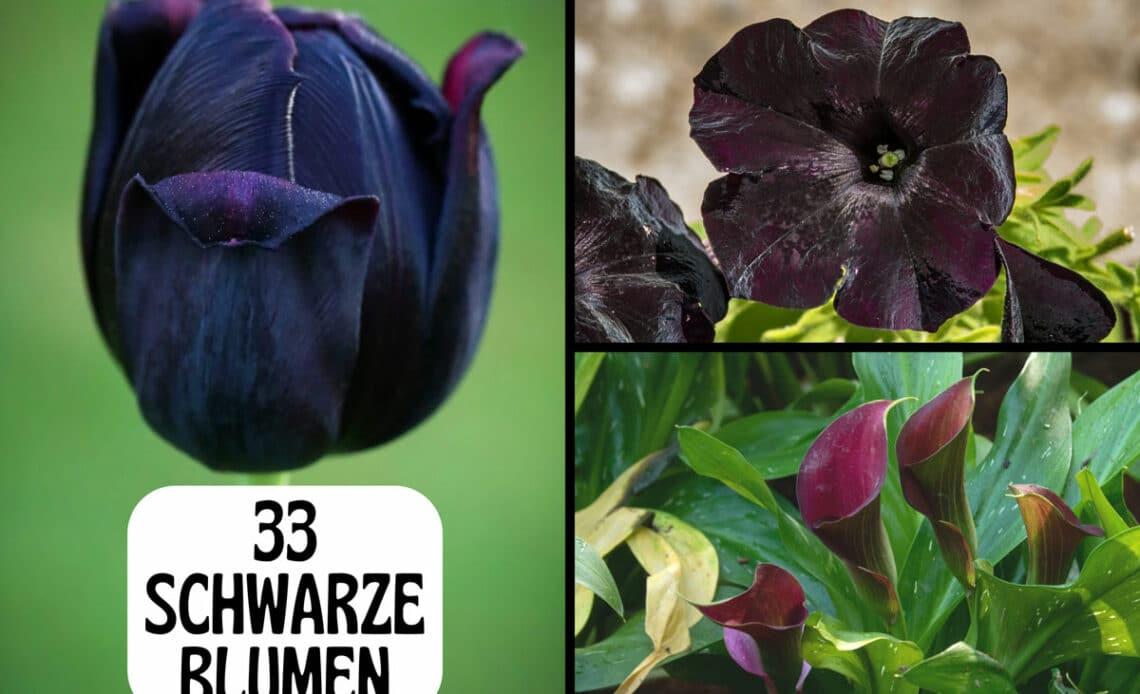 Schwarze Blumen - Tulpe, Petunie und Calla